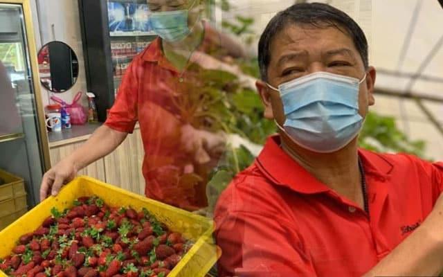 Strawberi Cameron Highlands kini 'dilelong' untuk elak kerugian akibat PKP
