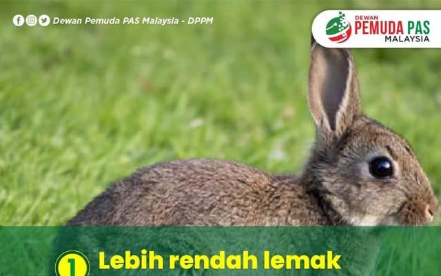 Ketika negara kecoh dengan isu kalimah ALLAH, Pemuda Pas promo daging arnab