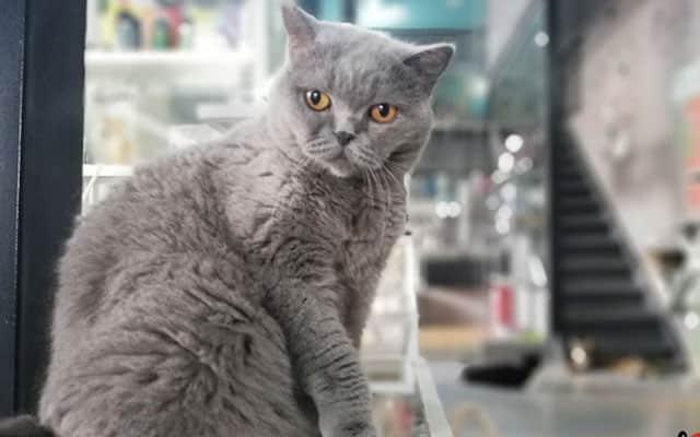 UPM sasar pencarian kucing yang dimiliki pesakit Covid-19