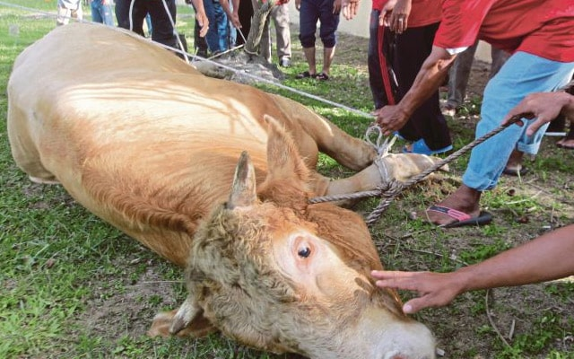 Pulau Pinang benarkan ibadah korban diteruskan