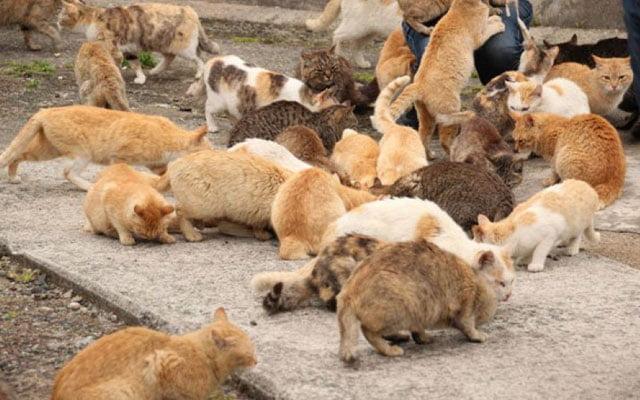 Jiran misteri suka tangkap dan makan kucing