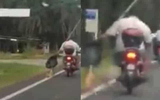 Panas !!! Aksi zalim lelaki seret kucing atas jalanraya sambil tunggang motosikal undang kecaman