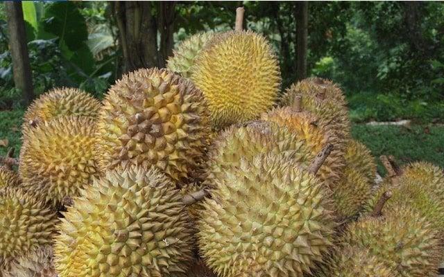 Harga durian dijangka RM3 per kg menjelang Ogos