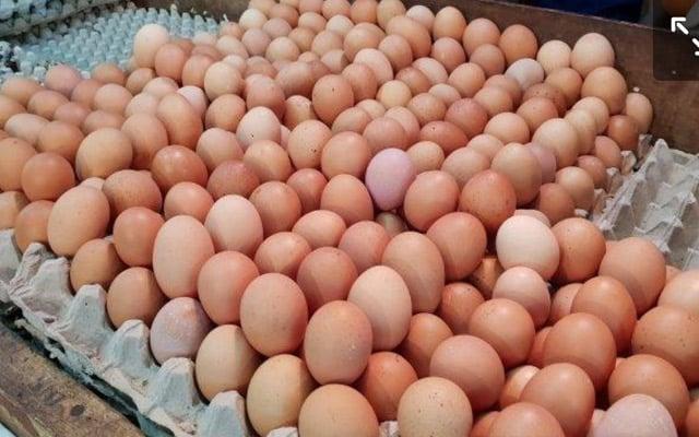 Harga telur ayam naik…